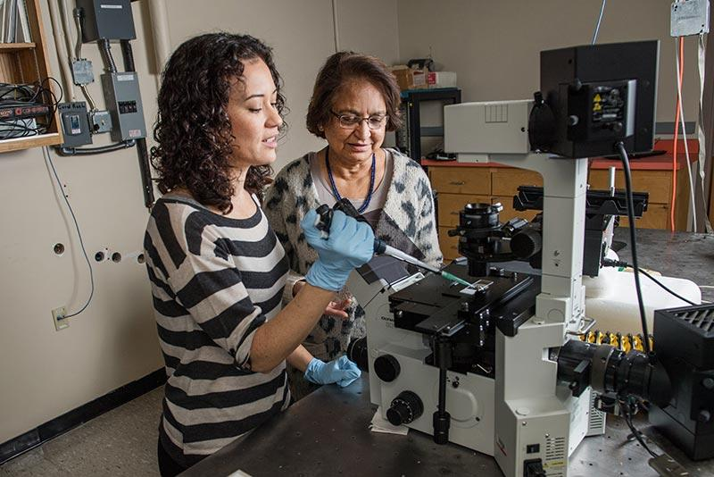 Rama Bansil and Maira Constantino study how H. pylori's shape contributes to its swimming  ability. Their work could impact the fields of drug delivery and cancer treatment.